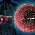 hepatitis_virus